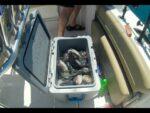Opening Day Black Sea Bass MASSACRE – Ocean City, MD (Opening Day Black Sea Bass MASSACRE – Ocean City, MD (Part 1))