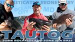 TAUTOG WERE CHEWING: MIxed bag and lots of Tog (TAUTOG WERE CHEWING: MIxed bag and lots of Tog)