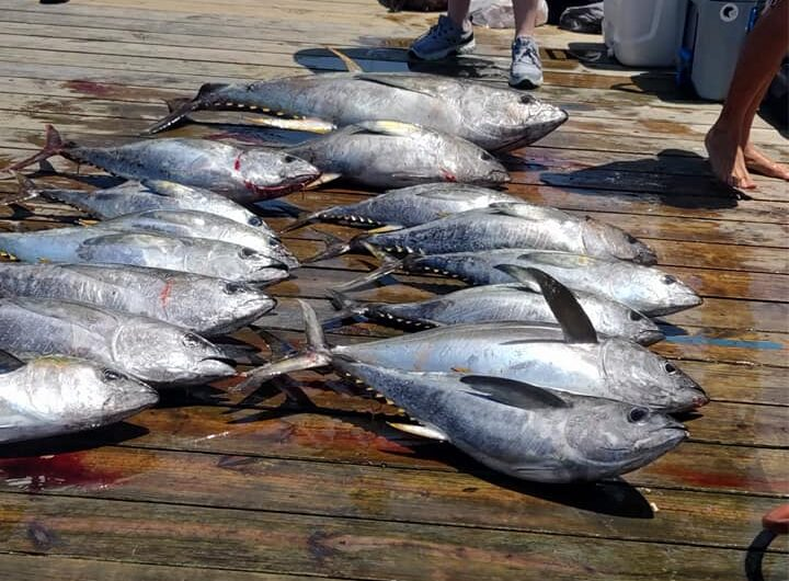 Fishing is been very good for the fleet ,,,some pics