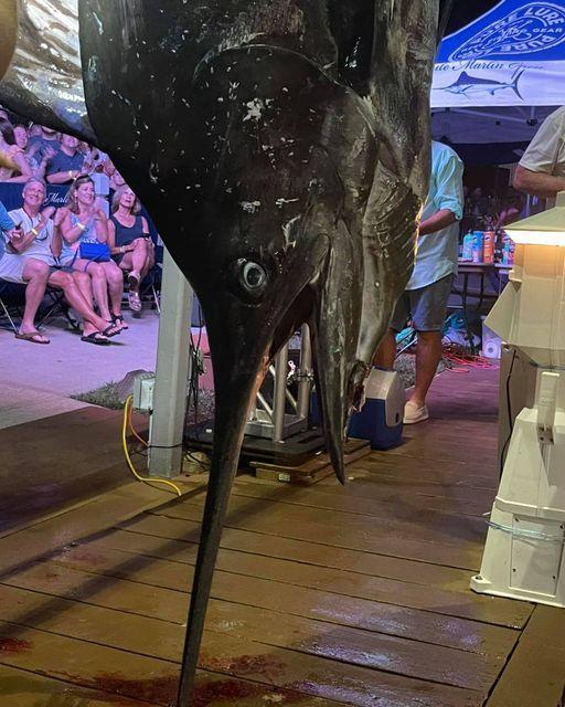 775 lbs Blue Marlin upset on the last night of