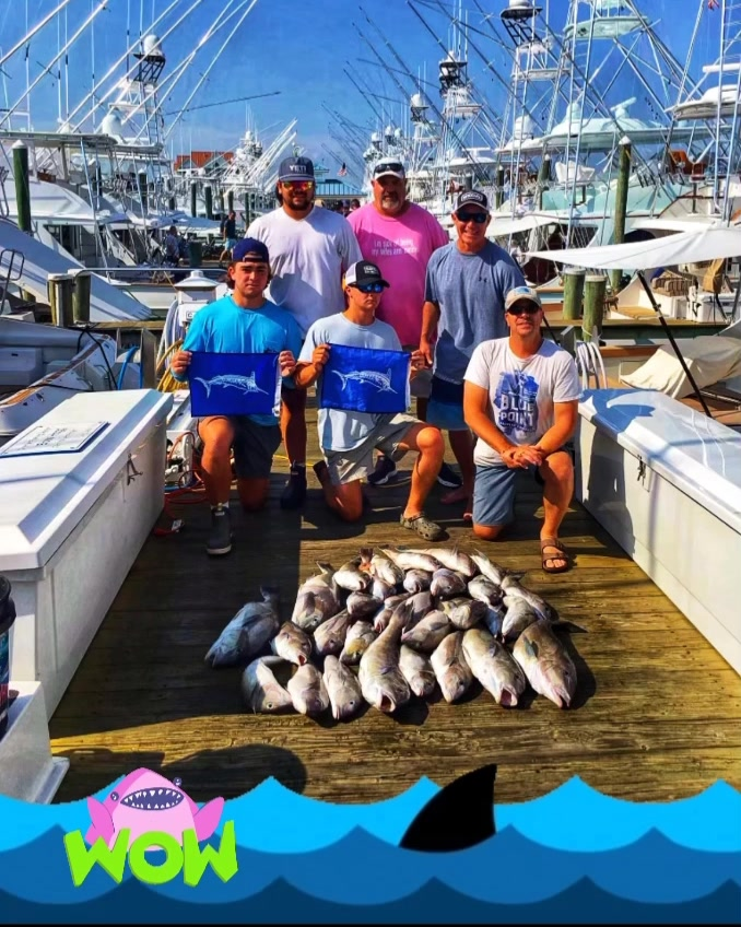 Great catch Tilefish and 2 White Marlin releases#jprrods #blackwellboatworks #s...