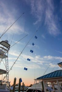 """""""Big Stick"""" with 6 white Marlin releases from Saturday! The (""""Big Stick"""" with 6 white Marlin releases from Saturday! The marlin are biting j…)"""